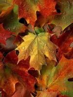 Autumn season of peace